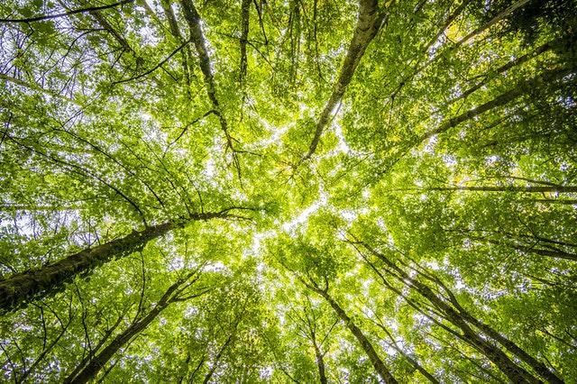 Wpływ lasu na organizm