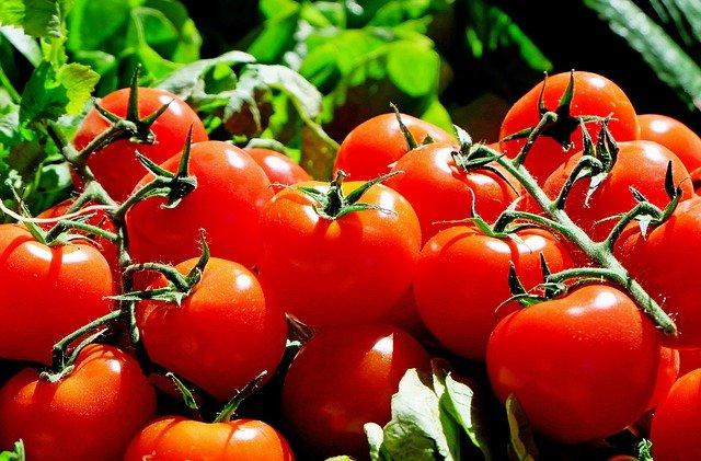 Jak często podlewać pomidory pod folią?